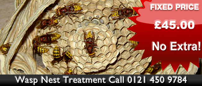 Wolverhampton Wasp Control, Wasp nest treatment or removal fixed price £45.00 covering Wolverhampton, Birmingham and The West Midlands. Contact us on  01922 610 932 / 0121 450 9784  for more info