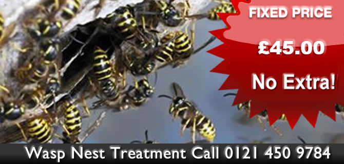 Wasp Control Wolverhampton wasps nest treatment, removal fixed price £45.00 no extras, same day, 24 hour, 7 days a week