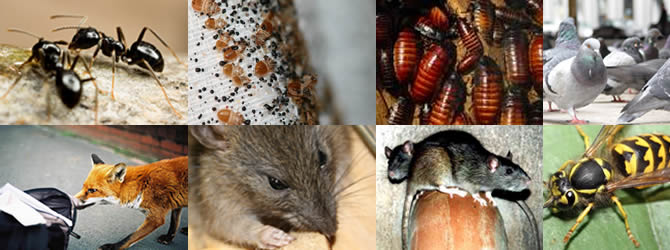 Birmingham Pest Control Service: professional pest control for Wolverhampton, Birmingham & The West Midlands, please contact us for more info.